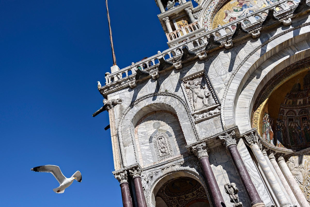 pigeon flies past saint mark's basilica venice photographer